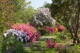 12519348-furzey--jardin-anglais-au-printemps