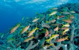 Le corail, comme refuge pour les poissons