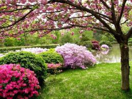jardin_anglais3