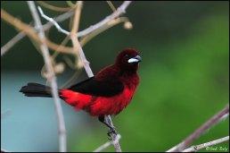 oiseaux1b