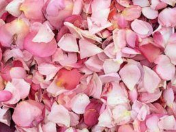 petales-de-rose-0bbe9c20-87cb-4667-8a0d-066ba95971b3