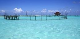 tahiti-protection-de-la-faune-marine-polynesienne