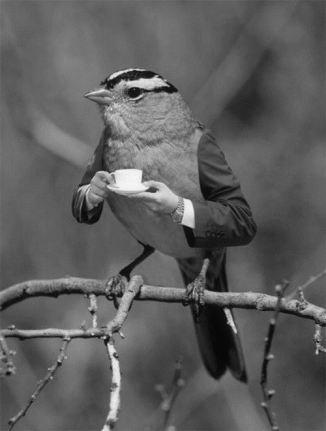 teatime-bird